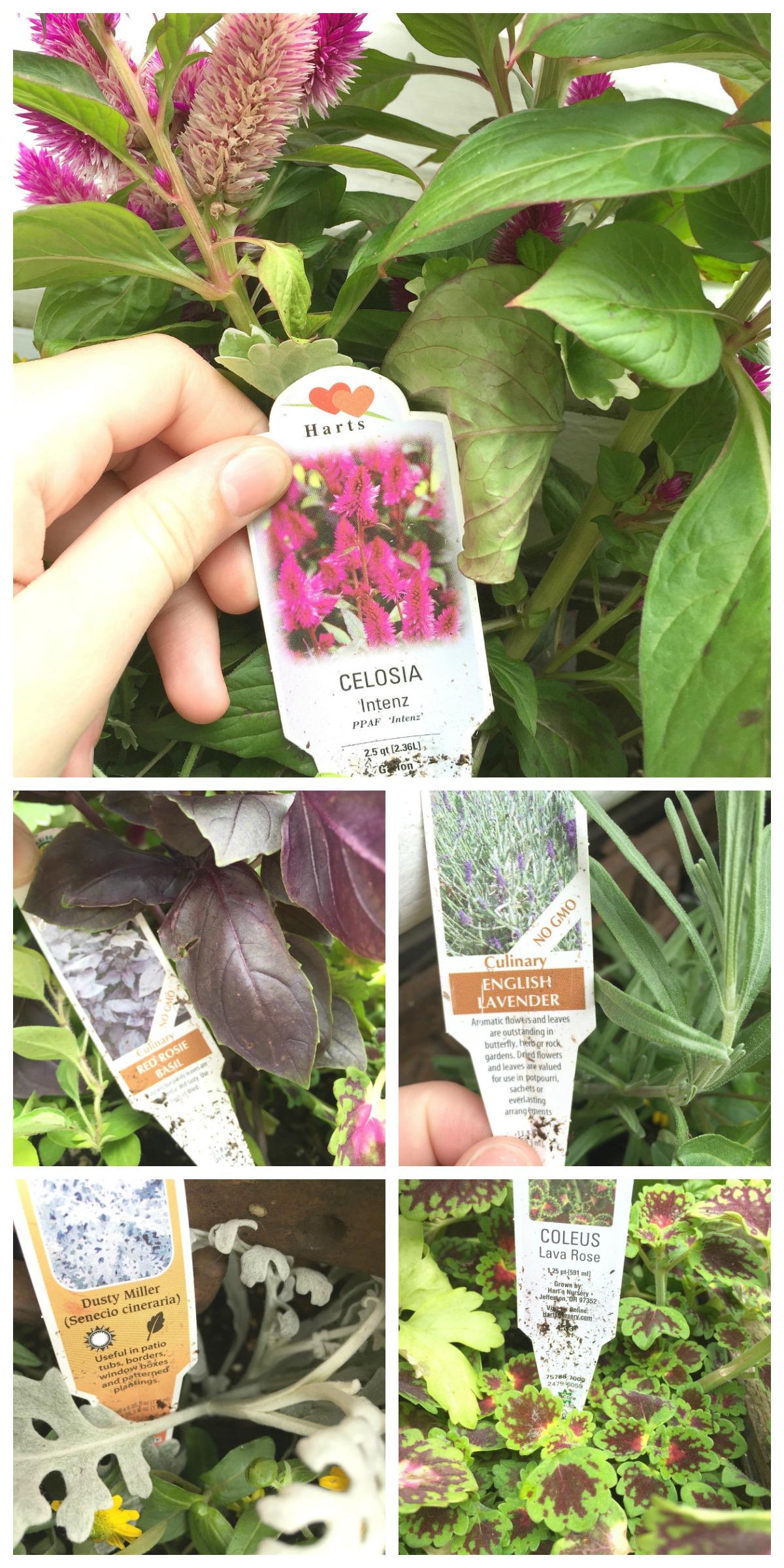 Farmhouse Planter Box for Herbs - Hallstrom Home