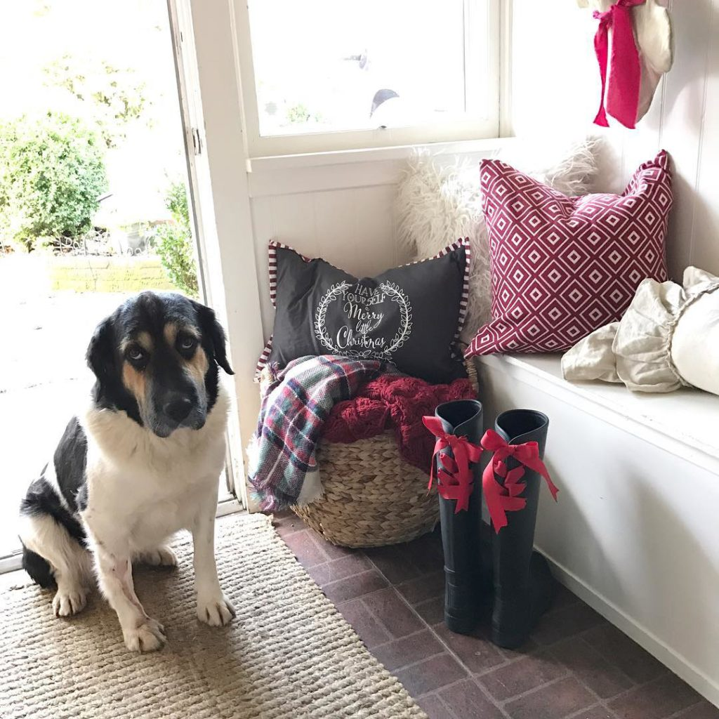 Our photo bomber is at it again! Come say Hi to Daisy as we get ready for the holidays at HallstromHome and for some reason I think Daisy is rolling her eyes at me #photobomber #dogstagram