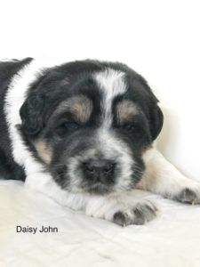 Daisy and Jack's Litter
