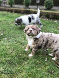 Puppy Lady - Female