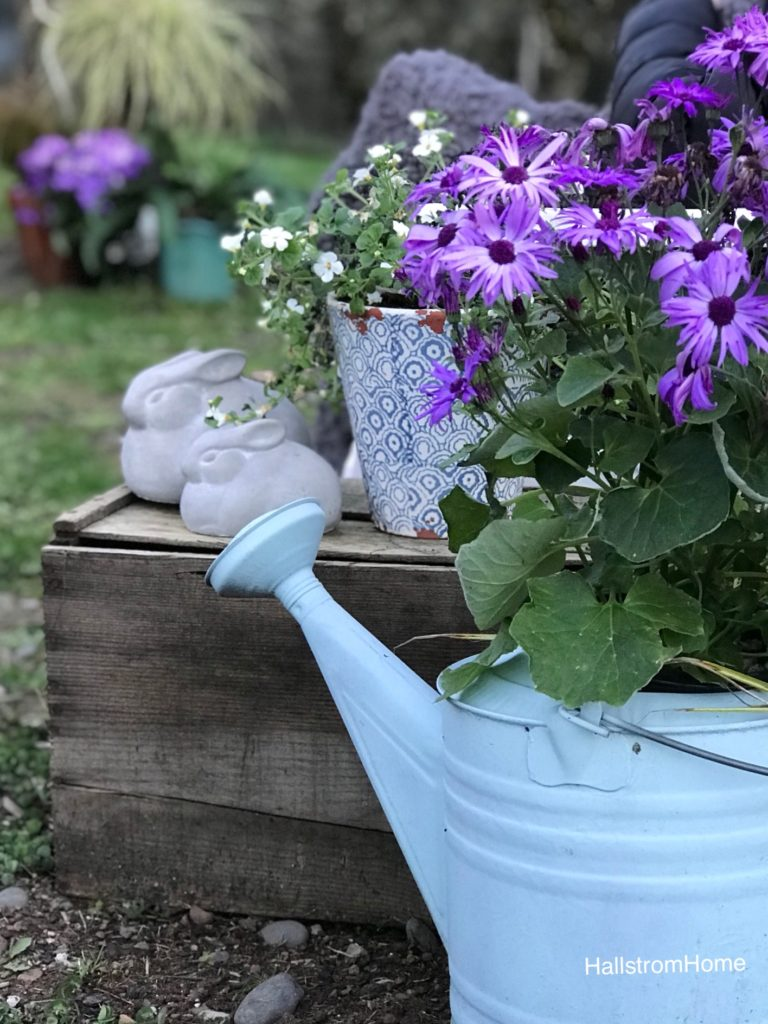 blue watering can with purple flowers and cement bunnies