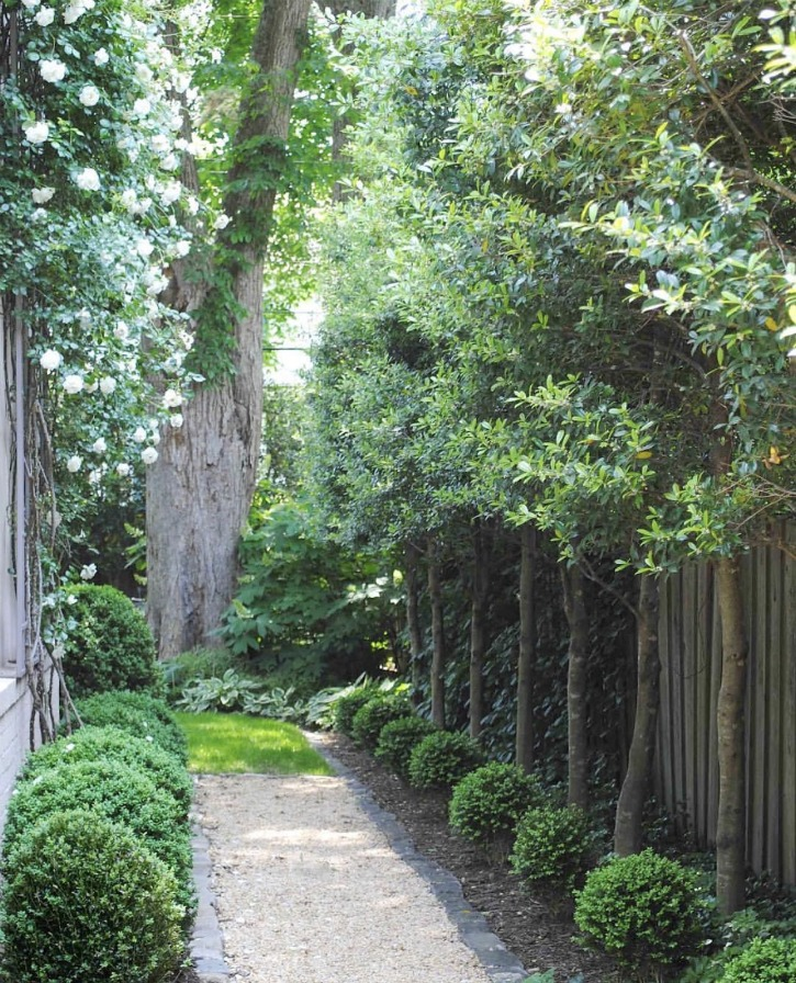 gardenpath lined with boxwoods
