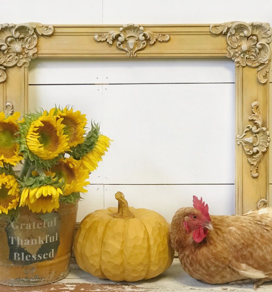 yellow frame against wall with yellow bucket filled with sunflowers and pumpkins with chicken sitting next to it