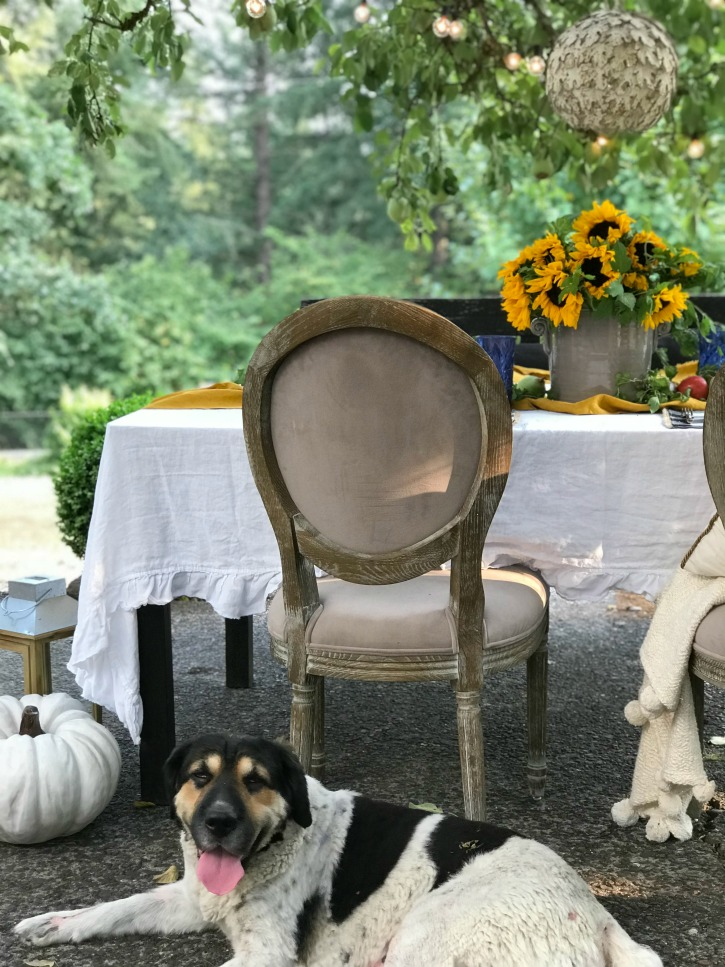 table outdoor setting with dog sitting at foot of chair