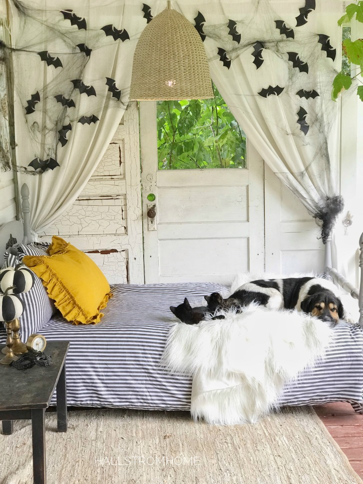 stipred bedding with dog and 2 cats on bed, on fuzzy white blanket. with chandelier and paper bats hanging on wall behind