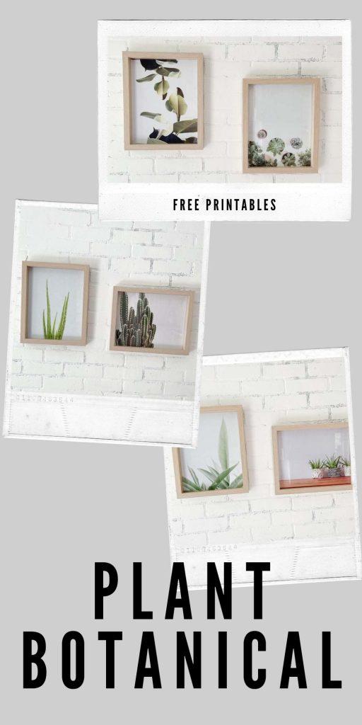 Free Plant Printables / Printable Coloring / Free Home decor Printables / Botanical printable / plant prints / Plant gallery / wall art / botanical wall art / HallstromHome